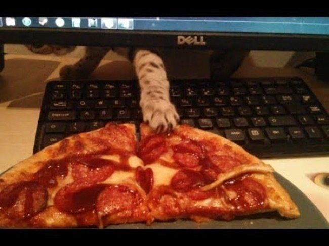 1-cat-thieves-intruders