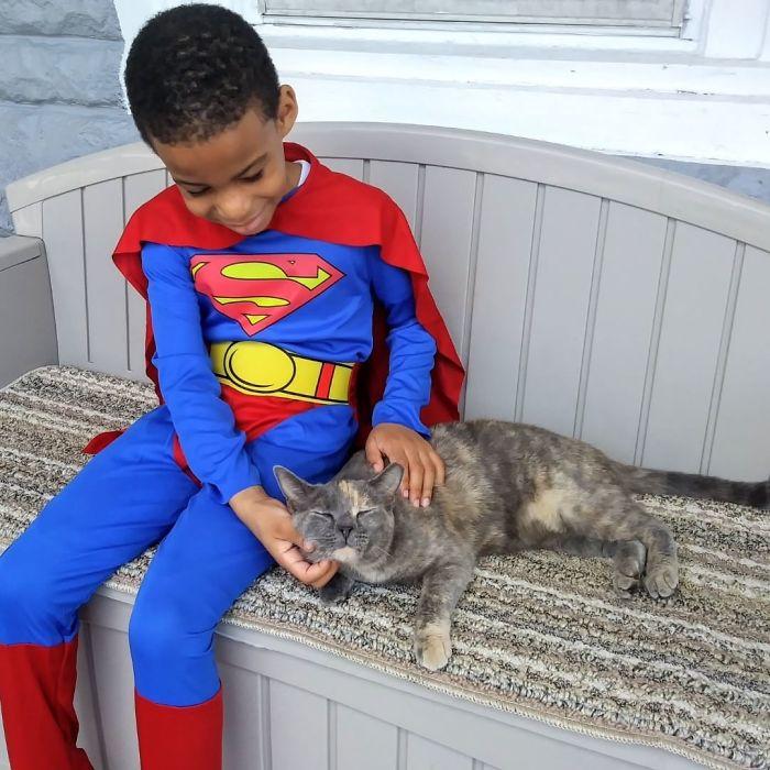 1-superhero-cats-saving