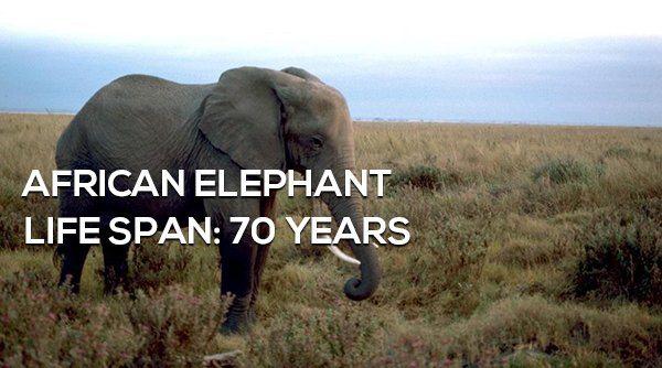 1-surprising-animals-live-longer-than-humans