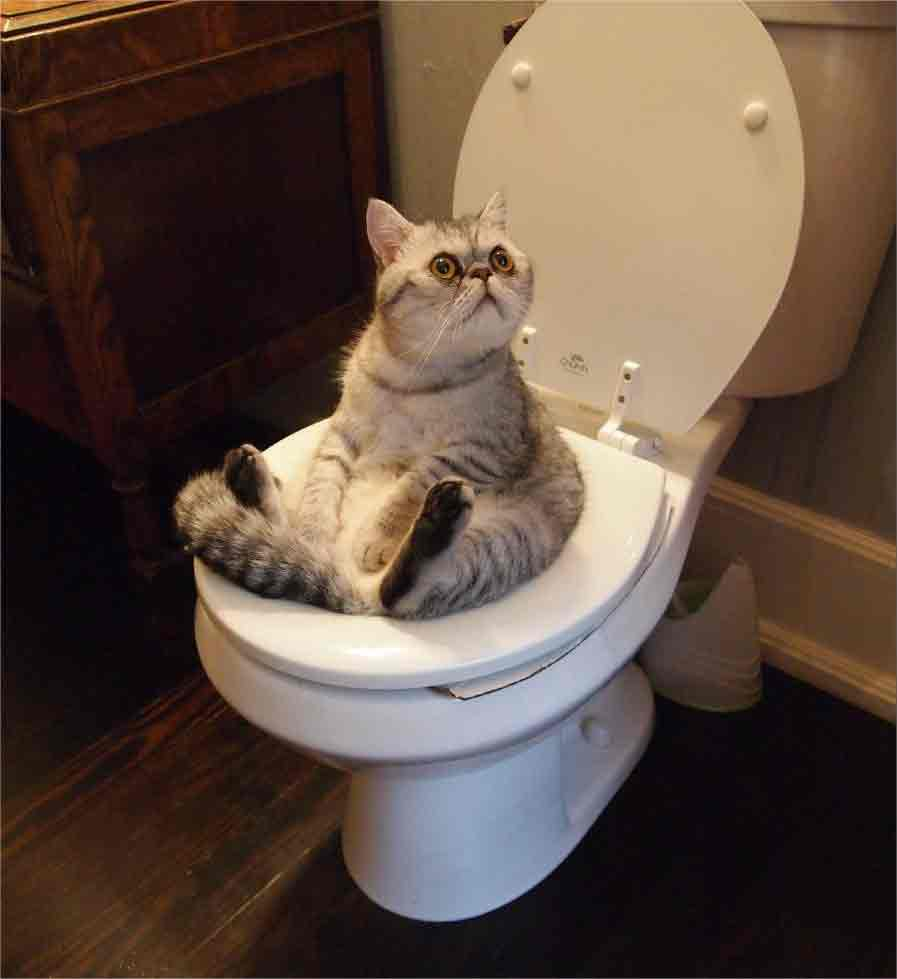 how to train your cat to use the toilet how to toilet train a cat how to train a cat to use the toilet how to teach a cat to use the toilet how to teach your cat to use the toilet how to train a cat to use the toilet and flush how to potty train your cat how to toilet train your cat how to train your cat to go to the toilet outside how to train my cat to use the toilet how to potty train your kitten how to potty train a cat to go outside how to potty train a cat without a litter box how long does it take to potty train a kitten how to train kitten to use toilet how to train cat to poop in toilet how to train your cat to poop in the toilet how long does it take to potty train a cat how to potty train a kitten to use the litter box how to teach a cat to poop in the toilet how to teach my cat to use the toilet how to potty train a cat to use the toilet how do i potty train my kitten how to potty train cats in litter box how to train cat for potty how do i train my cat to use the toilet how to train cat to pee in toilet how to get your cat to use the toilet how to teach a cat to pee in the toilet how to toilet train a cat without buying anything how to train your kitten to use the toilet how long does it take to toilet train a cat how to train your cat to poop in toilet how to potty train a cat to use the litter box how to train your cat to pee in the toilet how to potty train my kitten how do you train your cat to use the toilet how to train a cat to go to the toilet outside how to potty train my cat how to teach your cat to pee in the toilet how to train cat to toilet outside how to train a cat to go outside for toilet how to teach your cat to poop in the toilet how to potty train a kitten to use the toilet how to train a cat to toilet outside how to potty train a cat toilet how to train a cat to potty outside how to train a kitten to use toilet how to train cats to poop in the toilet how to train a cat for potty how to learn cat to use toilet how can i train my cat t
