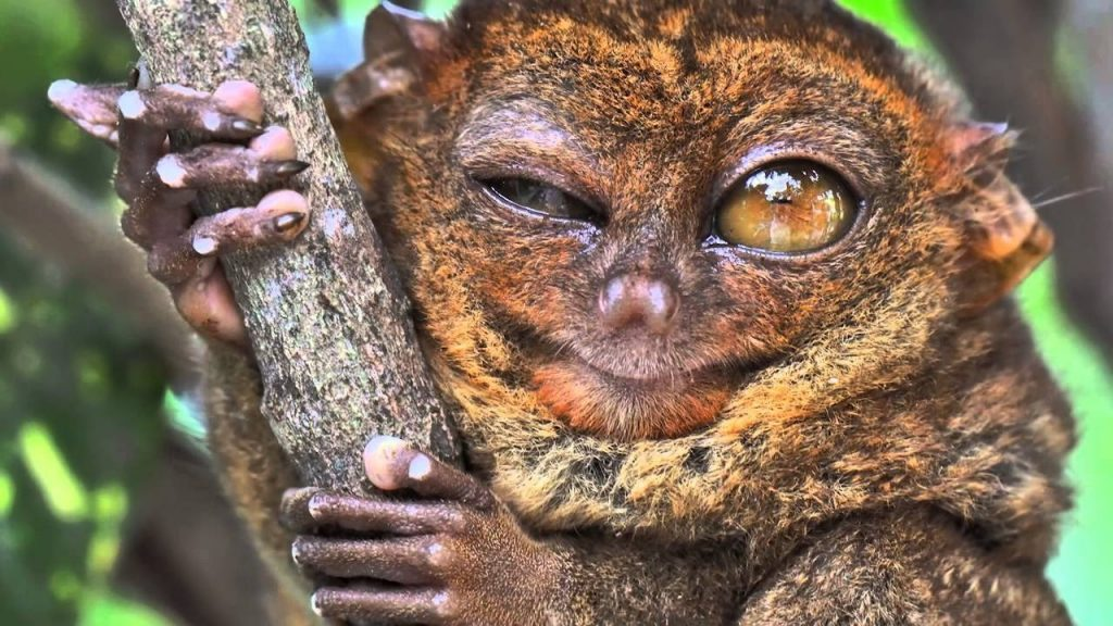 20 Animals So Ugly They Are Actually Cute - Animal